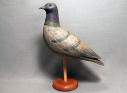 Pigeon (Old Looking)