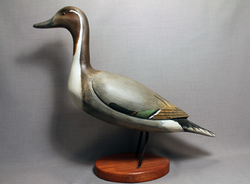 Pintail Standing