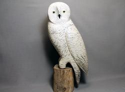 Owl Snowy on Perch