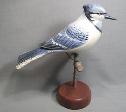 Blue Jay on Perch