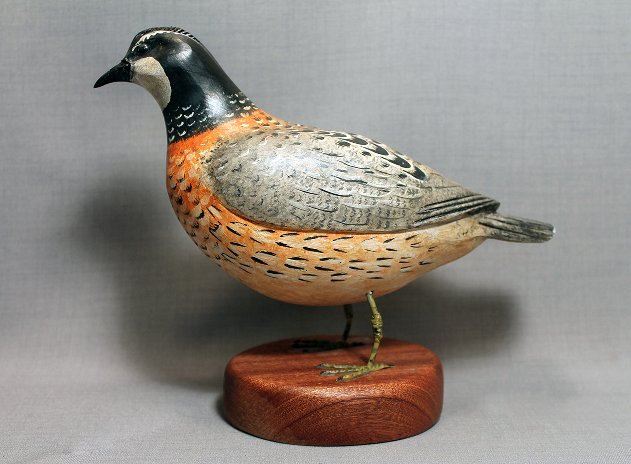 Quail Bobwhite with Feet