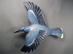 Bluejay Flying
