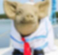 parker the pig.jpg