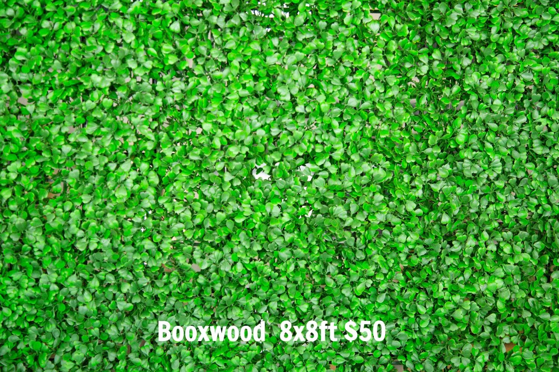 Boxwood backdrop 8x8ft
