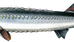 Beluga Caviar (Huso Huso)          #BlackCaviar #CakeOfPower #Beluga