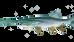 Paddlefish Caviar (Polyodon spathula) #BlackCaviar #CakeOfPower #Paddlefish