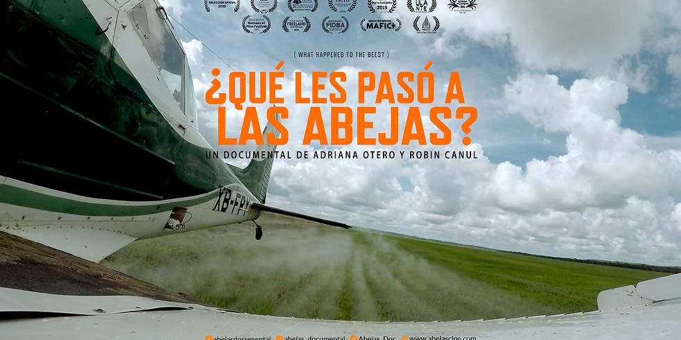 ¿QUÉ LES PASÓ A LAS ABEJAS? |  Español
