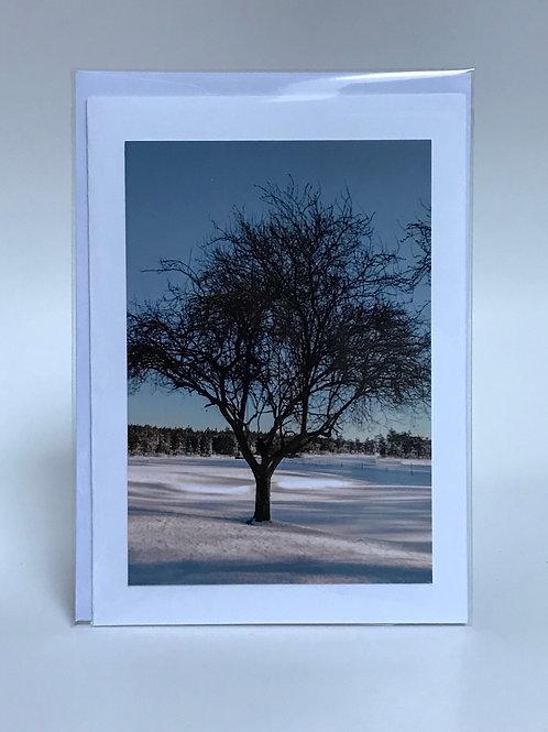 Winter Tree - Greeting Card