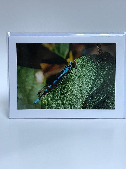 Dragon Fly - Greeting Card