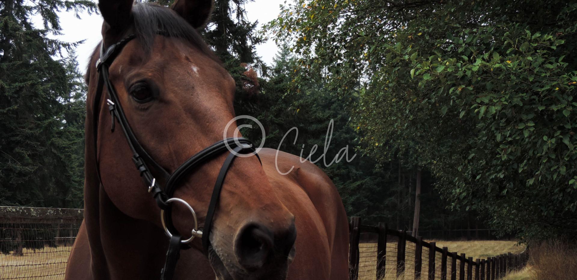 WM HORSE.jpg