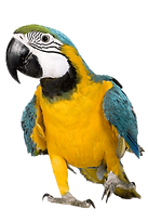 pic_macaw_edited.png