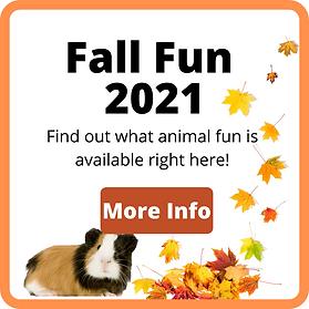 Fall Fun-3.png
