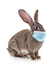 Rabbit_Mask (1).jpg