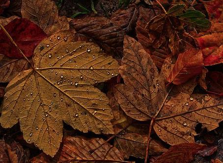 Podzimní splíny aneb já a moje kalhoty