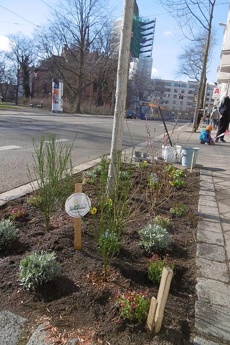 Baumscheibenbepflanzung Wurzner Straße 1