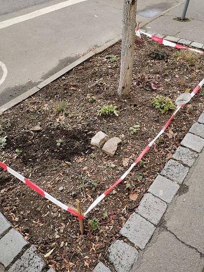 Baumscheibe Wurzner 163.jpg