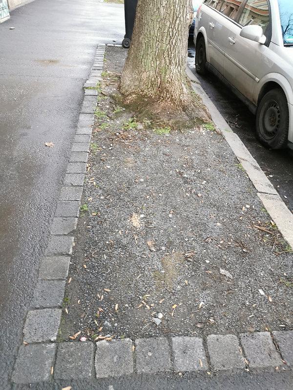 Baumscheibe Wurzner 177.jpg