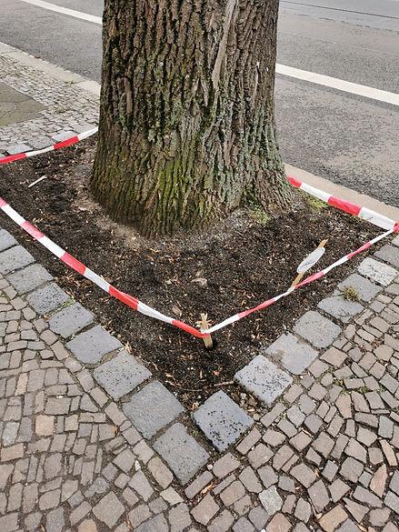 Baumscheibe Wurzner 159.jpg