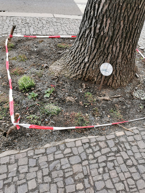 Baumscheibe Wurzner 151.jpg