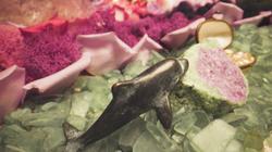 Mermaids Garden-Full Still-Dolphin
