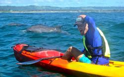go_sea_kayaks_slide1