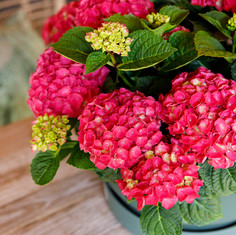 Colour Your Table Rood (4).jpg