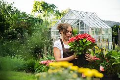 gardening-flower-garden-flowering-hydran
