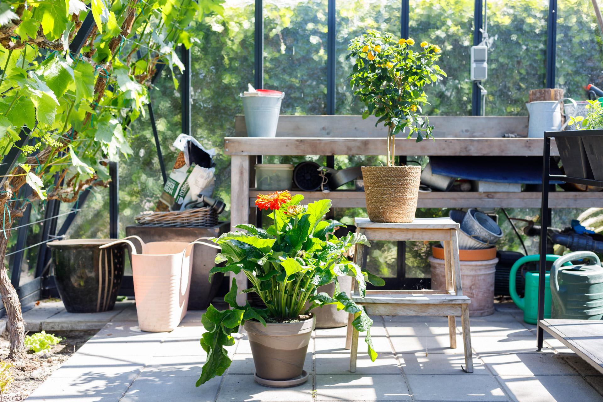 De Plantenbox