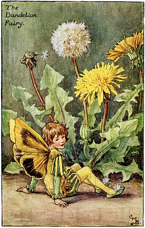 """""""Ellwyn's Fairy Glen"""""""