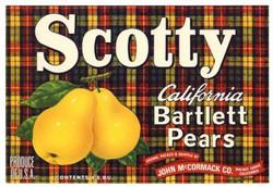 Scotty