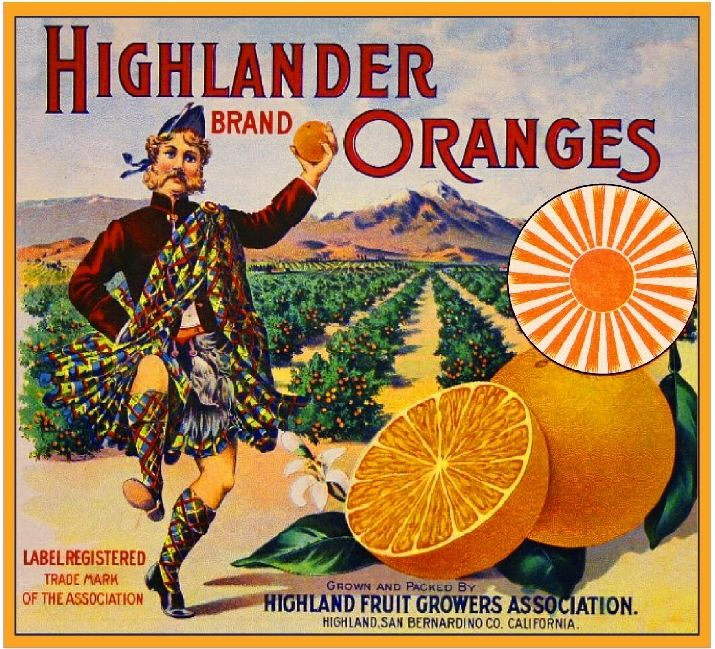 Highlander Oranges