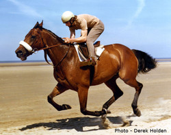 Red Rum Racehorse