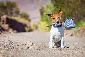 Il cane randagio causa un sinistro - l'ASL ne risponde