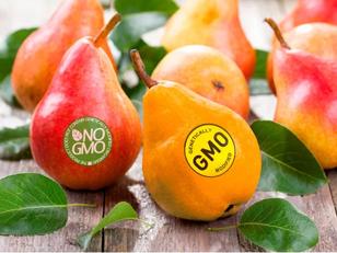Autorizzazione degli OGM? Ne parlo con il Salvagente