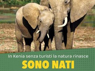 140 ELEFANTINI NATI IN KENYA, QUANDO LA NATURA SI RIPRENDE IL SUO SPAZIO