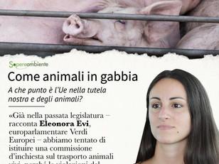 LA MIA INTERVISTA SU GABBIE E TRASPORTO ANIMALI VIVI PER SAPERE E AMBIENTE