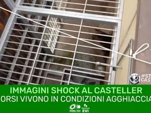 GLI ORSI AL CASTELLER VIVONO IN CONDIZIONI AGGHIACCIANTI!