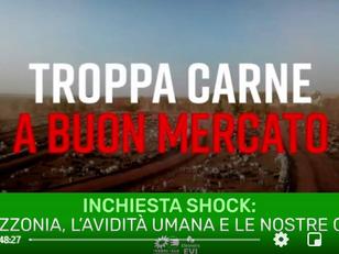 L'AMAZZONIA IN FIAMME, L'AVIDITA' UMANA E LE NOSTRE COLPE
