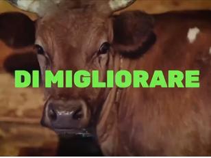 FERMIAMO LA BARBARIE DEL TRASPORTO DI ANIMALI VIVI!