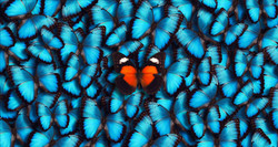 Butterflies-individuality-unique