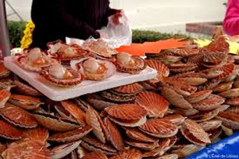 coquilles.png