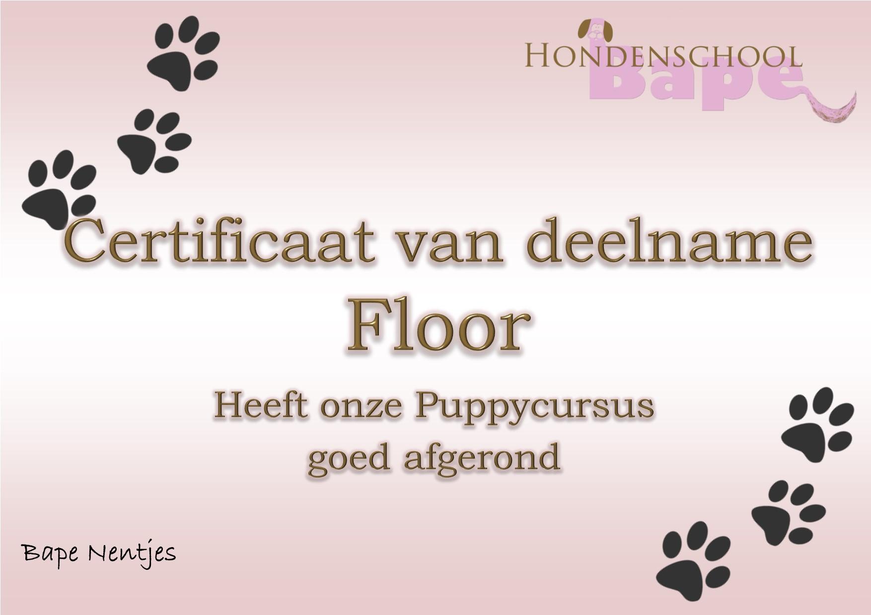 05 floor puppy