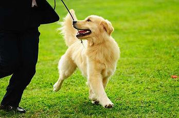 met je hond wandelen