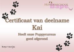 certificaat puppy kai