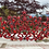 Thumbnail: Ravishing Red Tiara