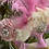 Thumbnail: Feathered Antoinette Mask