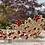 Thumbnail: Elegant Coronation Tiara in Red