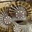 Thumbnail: Pearl Fan Mask