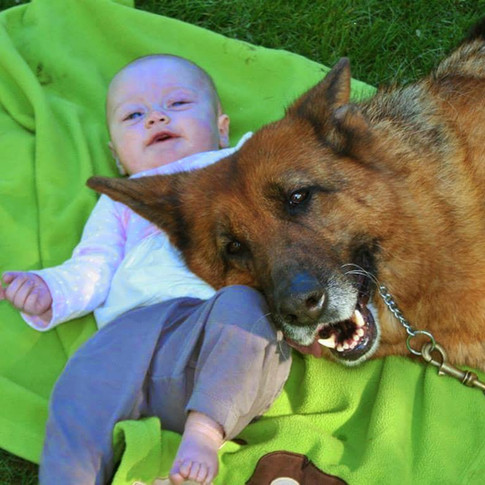 Dog trainer in development Catie hard at work