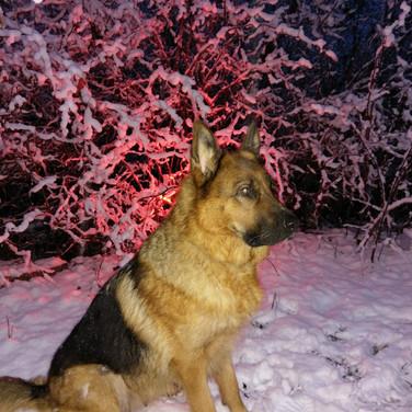 Chakira posing in the snow